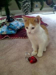 Kitten under tree