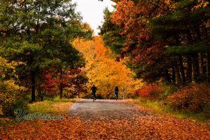 biking-through-autumn